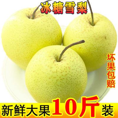 76556/河北雪梨10斤包邮整箱新鲜水果梨子5斤当季雪花梨非酥梨皇冠梨