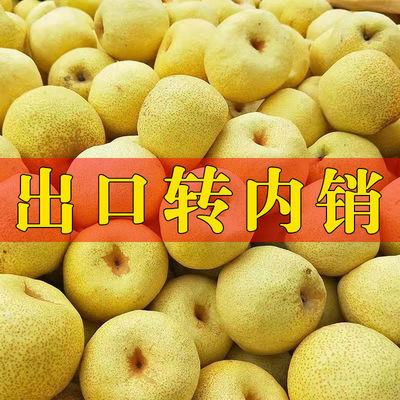 75709/砀山酥梨正宗百年梨树新鲜梨子包邮水果批发酥梨脆甜多汁止咳化痰