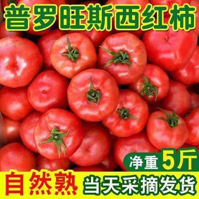 云南露天沙瓤普羅旺斯西紅柿新鮮番茄現摘生吃蔬菜5斤10斤包郵