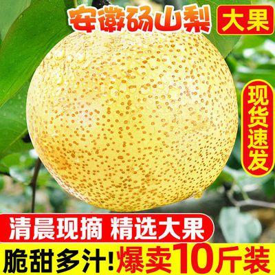 78967/砀山梨子10斤新鲜水果白酥梨5斤百年梨树非皇冠梨青梨整箱批发3斤