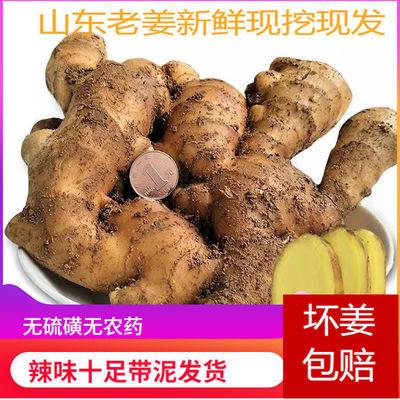 正宗山东生姜老姜泡脚新鲜现挖现发黄姜月子姜土姜2/3/5斤批发价