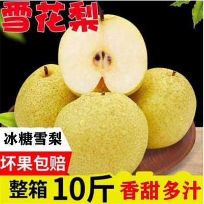 【冰糖雪梨】当季梨子新鲜10斤整箱雪花梨应季水果当季5斤3斤