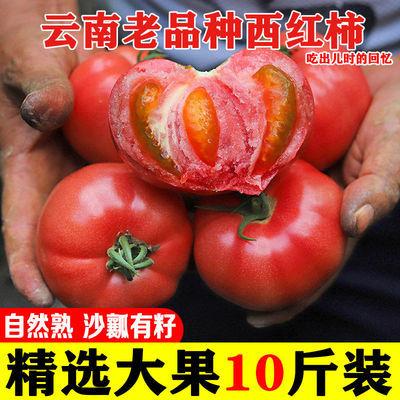 现摘云南普罗旺斯沙瓤西红柿生吃新鲜大番茄自然熟水果大番茄批发