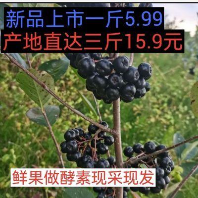 77790/东北黑果花楸不老梅鲜果野樱梅蓝樱梅小黑果现采现发果干