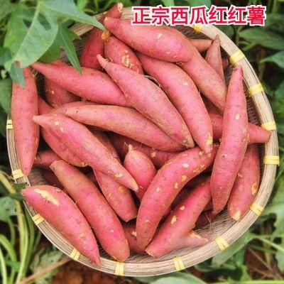 西瓜红著薯地瓜番薯龙九番薯黄心地瓜红蜜薯农家香甜红薯现挖新鲜