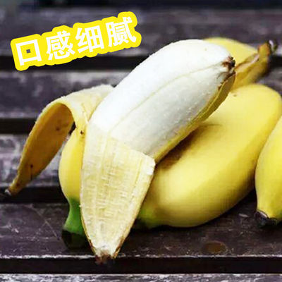 78991/小米蕉 云南版纳粉蕉小鸡蕉生小芭蕉安南蕉青新鲜香蕉水果净5斤装