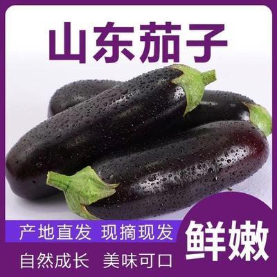 新鲜长茄子紫色长茄子新鲜蔬菜批发价紫茄子紫皮茄子新鲜包邮到家