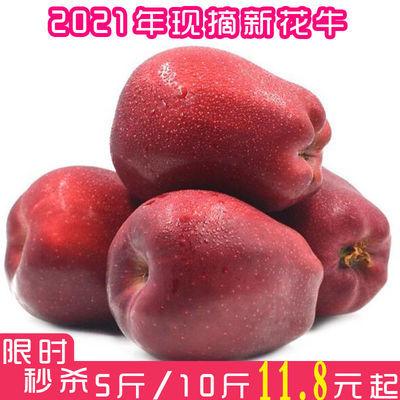 甘肃天水花牛苹果特级脆甜粉甜刮泥当季新鲜水果整箱批发3/5/10斤