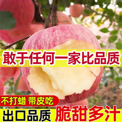 【超低价】红富士苹果当季应季新鲜苹果5/10斤大果冰糖心现摘批发