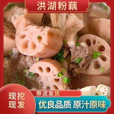 【煲汤粉藕】正宗洪湖粉藕新鲜带泥现采现发1/3/5斤软糯香甜炖汤