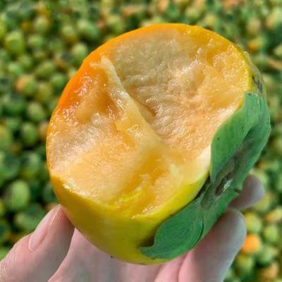 【甜爆了】脆柿子甜柿子巧克力硬柿子脆甜多汁当季新鲜水果