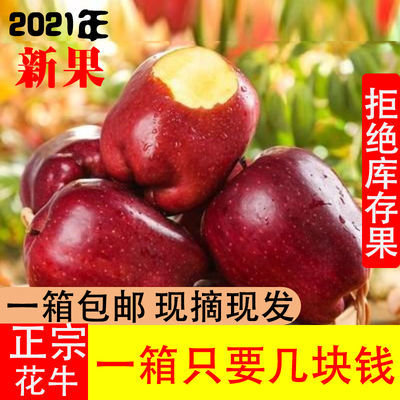 天水秦安花牛苹果10斤新鲜蛇果刮泥苹果宝宝辅食甘肃特产