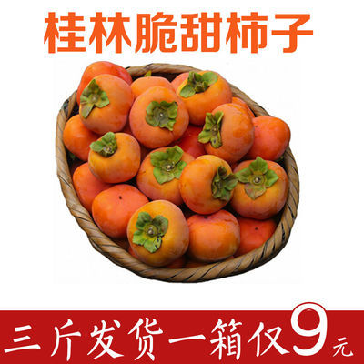 广西脆柿子第一名新鲜爆甜大果当季批发即食无籽巧克力柿脆甜包邮
