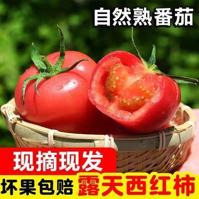 云南露天现摘现发自然熟新鲜西红柿新鲜番茄生吃水果3/5/9斤批发