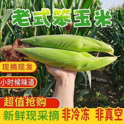 现摘新鲜老式玉米黄玉米棒子非甜糯非转基因笨玉米带皮苞米笨玉米