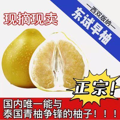 云南西双版纳柚子东试早蜜柚产地直发孕妇当季新鲜水果5斤傣御柚