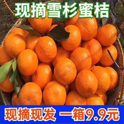雪杉蜜橘现摘鲜甜无核薄皮孕妇柑橙橘新鲜当季水果3/5/10斤净重