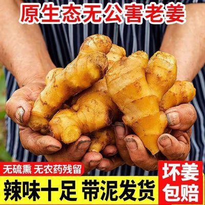 89809/生姜蔬菜现挖泥姜山东新鲜黄姜整箱老姜1斤5斤10斤鲜姜现挖月子姜