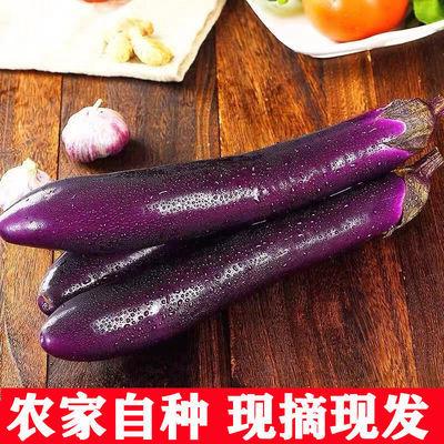 云南新鲜紫长茄子1/3/5斤紫茄子当季农家自种长线茄子现摘 包邮