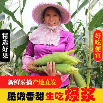 玉米新鲜黄金水果甜玉米广西蔬菜玉米棒批发现摘代餐即食甜糯玉米