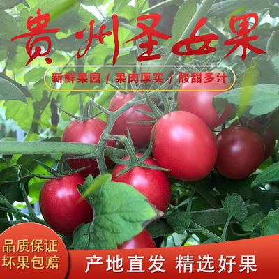 现摘贵州圣女果小番茄千禧果小西红柿蔬菜新鲜自然熟整箱批发包邮