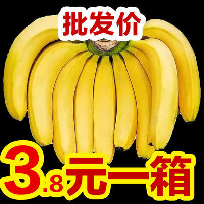 【新店促销】云南香蕉新鲜水果香蕉批发高山香蕉米蕉特价包邮