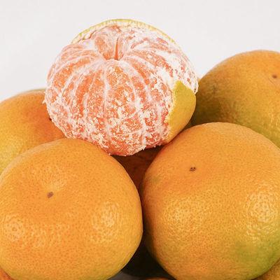 四川蜜桔现摘青皮无子当季新鲜孕妇果柑橘整箱橘子桔柑子桔子酸甜