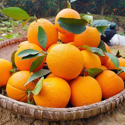 现摘高山脐橙子水果新鲜超甜薄皮当季水果手剥冰糖甜橙脐橙批发价