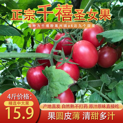 现摘贵州千禧果圣女果小番茄小西红柿新鲜水果蔬菜自然熟整箱批发