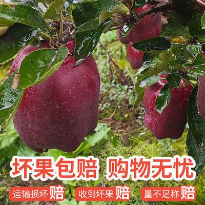 甘肃天水花牛苹果10斤整箱正宗应季蛇果红粉面苹果新鲜水果丑苹果