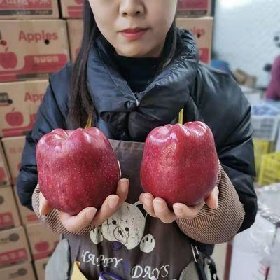 93330/【正宗】甘肃天水花牛苹果蛇果牛油果5/10斤纸箱婴儿粉面粉甜刮泥