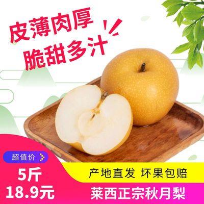 山东莱西正宗秋月梨新鲜水果产地直供现摘现发5斤装脆甜多汁