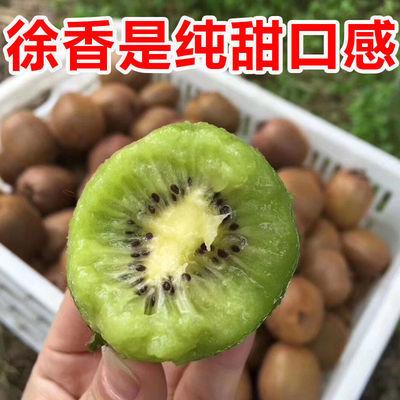 【现摘徐香】正宗陕西周至徐香猕猴桃水果孕妇奇异果非红心黄心