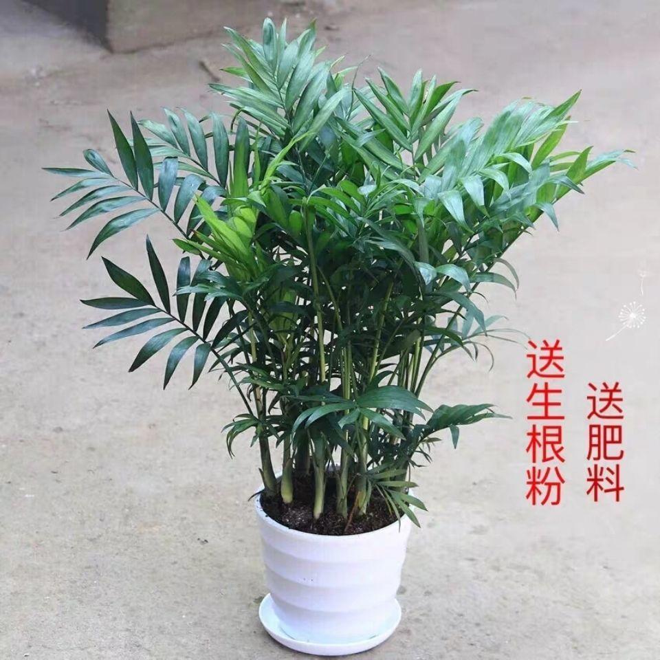 绿植盆栽图片大全