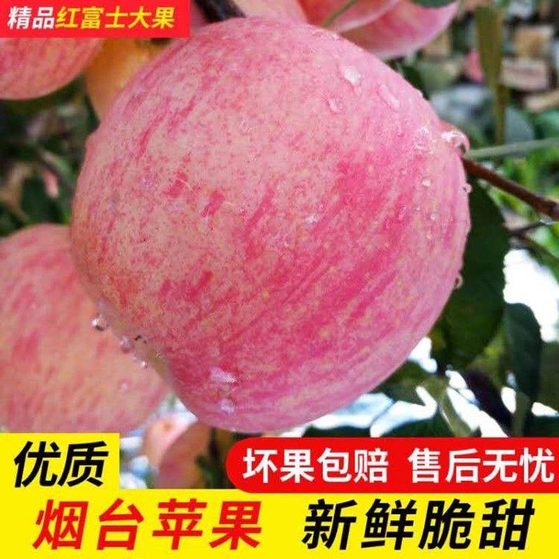 山东烟台栖霞红富士苹果新鲜水果脆甜正宗3/5/10斤果园直发不打蜡