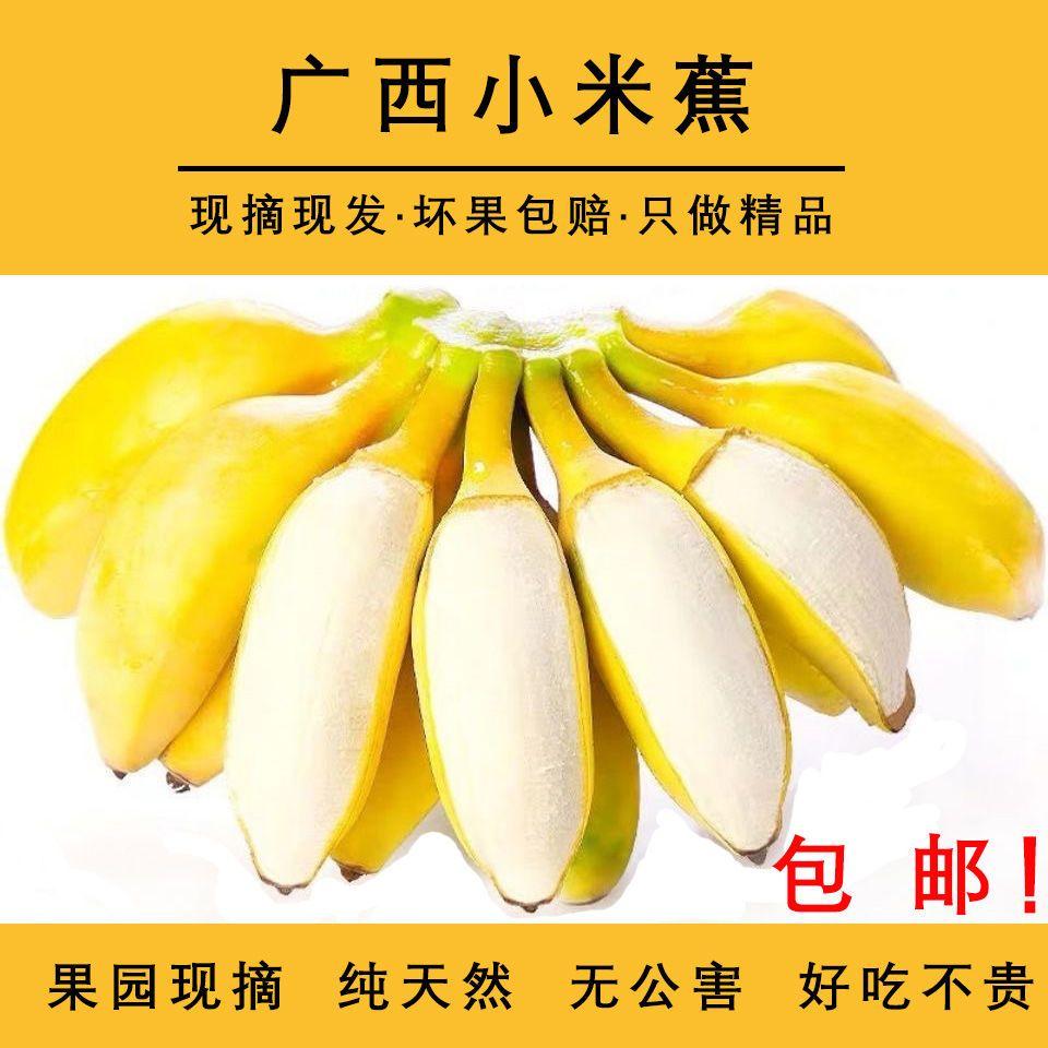 广西小米蕉新鲜当季水果现摘整箱批发装土 芭蕉非苹果蕉皇帝蕉