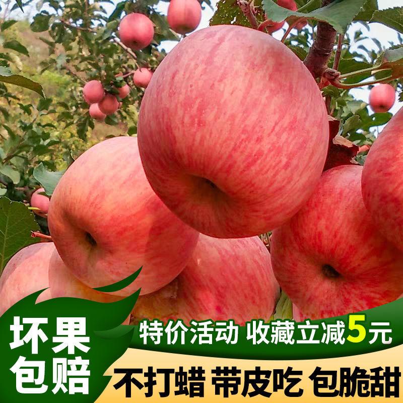 正宗山东烟台栖霞红富士苹果5斤/10斤 新鲜水果脆甜整箱批发包邮