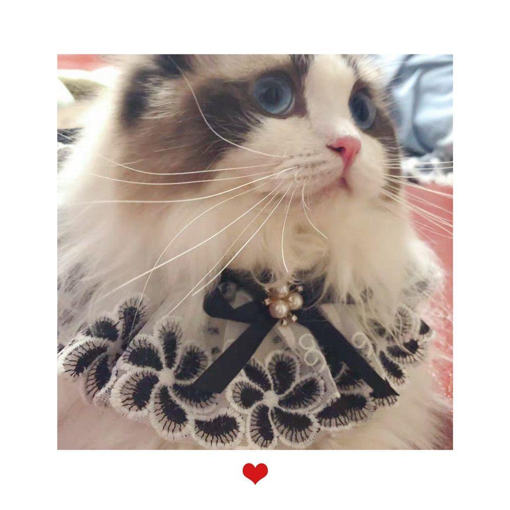 新版猫咪在哪里下载 新版猫咪app3.0下载