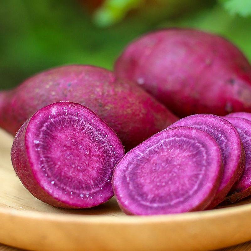 沂蒙山新鲜紫薯现挖紫地瓜农家自种紫心地瓜紫薯番薯新鲜红薯