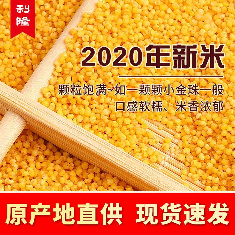 2020年新米赤峰敖汉天山2斤5斤黄小米油厚吃的宝宝月子米熬粥包邮