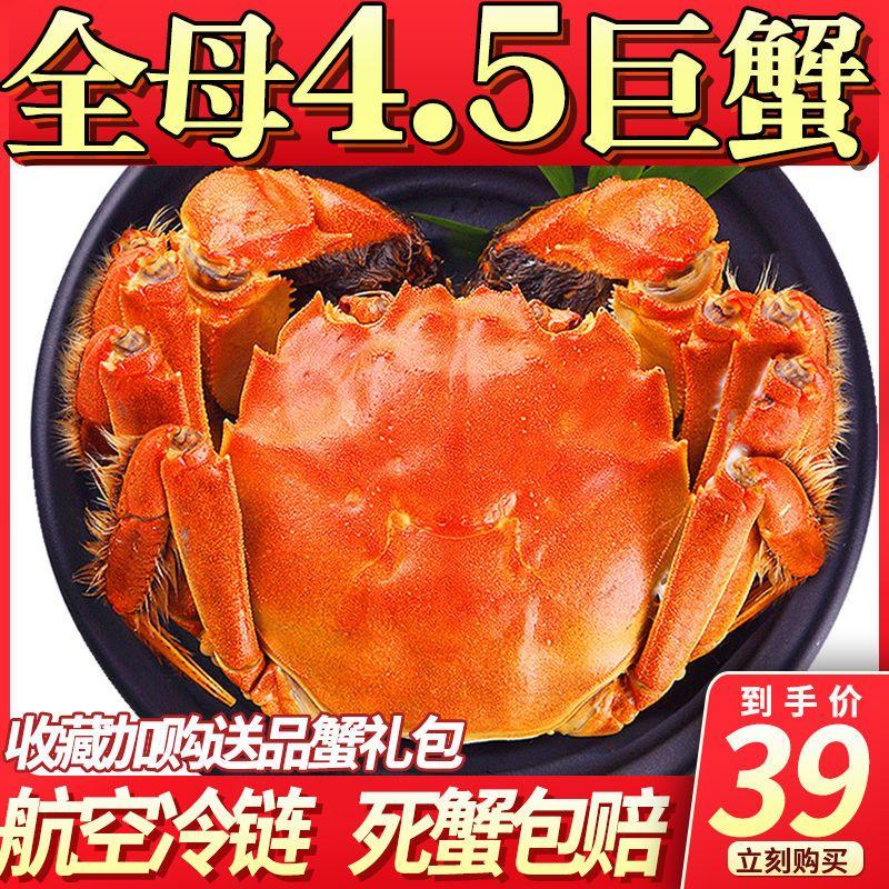 全母大闸蟹特大公螃蟹鲜活现货中秋礼盒装海鲜4.0-3.5两