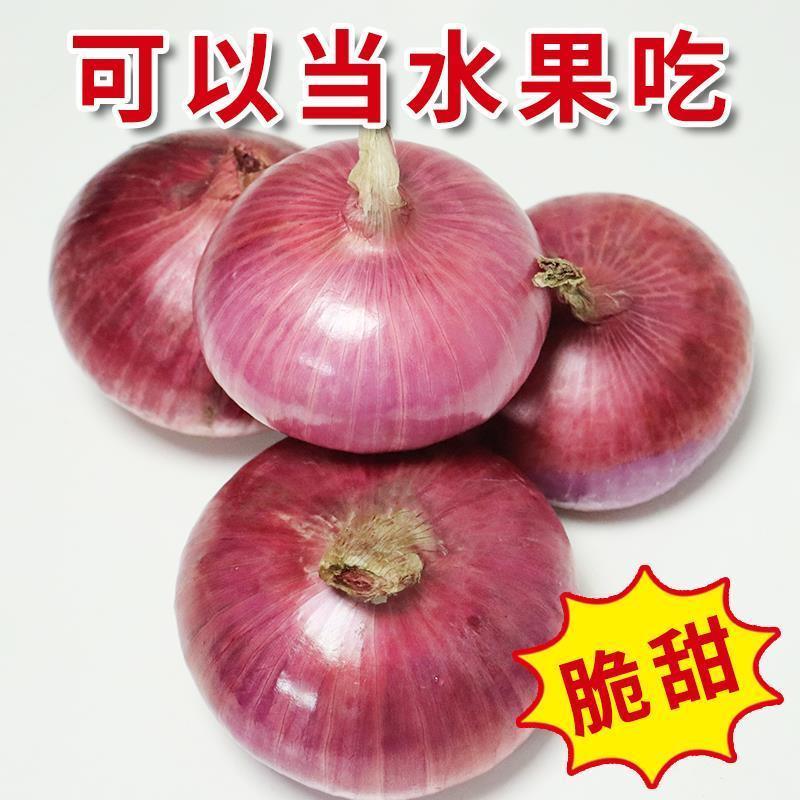 洋葱新鲜紫皮红皮黄皮深紫元葱5斤10斤现挖圆葱头农家3斤批发蔬菜