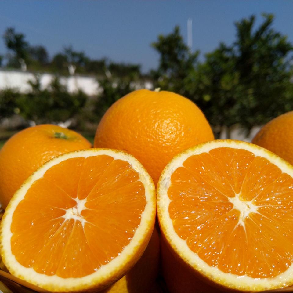 秭归新鲜橙子 手剥高山脐橙9/5斤