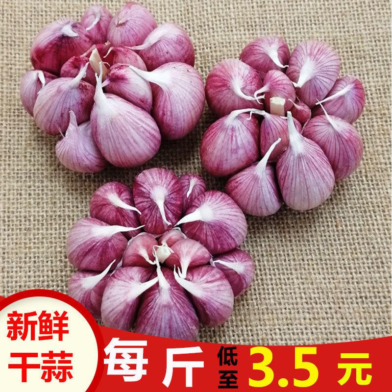 75873-红皮大蒜新鲜干蒜大蒜头种子 香蒜头干蒜紫皮大蒜批发价2/5/10斤-详情图