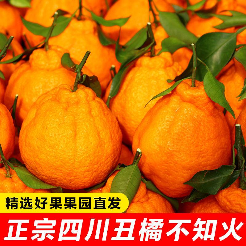 四川丑橘不知火丑柑丑八怪橘子水果批发新鲜水果耙耙柑桔子柑橘