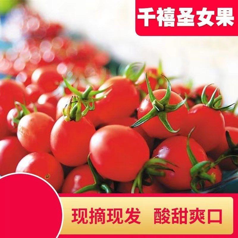 【精选】现摘圣女果5/3/2斤装当季新鲜水果小番茄蔬菜西红柿