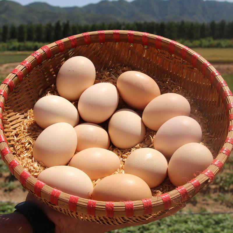 正宗土鸡蛋散养农家新鲜土鸡蛋散养农村笨鸡蛋草鸡蛋整箱特价批发