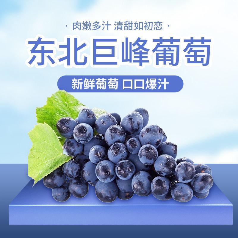 东北水果新鲜巨峰黑葡萄1/4斤