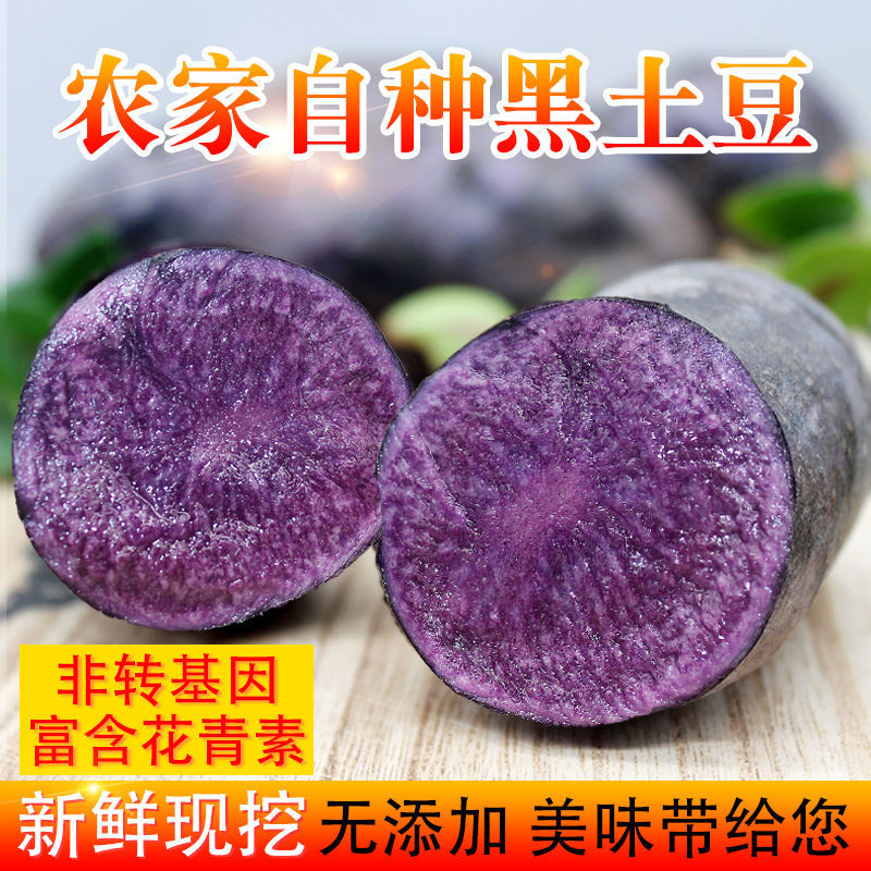新鲜现挖黑土豆农家自产马铃薯黑洋芋黑金刚黑美人包邮主图2