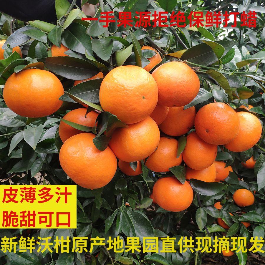 广西武鸣沃柑 5斤10斤装 当季新鲜橘子桔子纯甜果园直供现摘现发